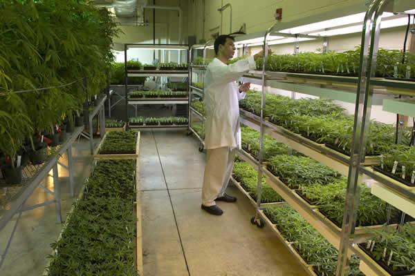 تحقیقات انجام شده بر روی گیاهان دارویی