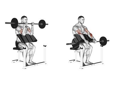 ناحیه فشار عضله در حرکت جلو بازو لاری هالتر دست برعکس