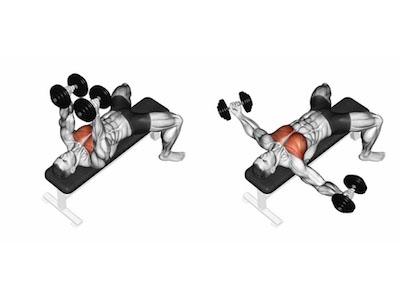 ناحیه فشار عضله در حرکت قفسه سینه دمبل