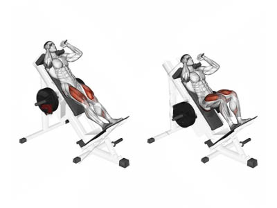 ناحیه فشار عضله در حرکت هاک پا دستگاه