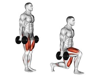 عضلات درگیر در لانگز دمبل راه رفتنی