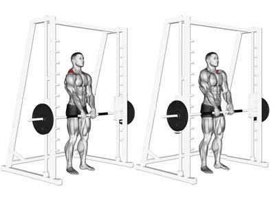 عضلات درگیر شراگ اسمیت از جلو