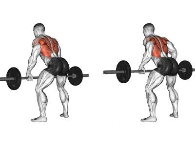 عضلات درگیر زیر بغل هالتر خم