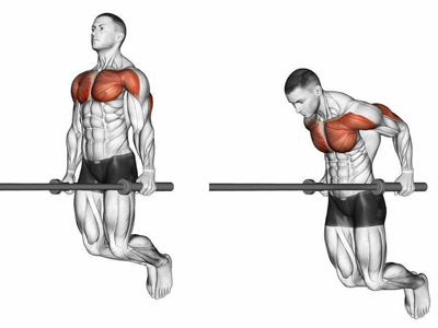 عضلات درگیر پارالل