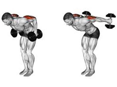 عضلات درگیر پشت بازو کیک بک دمبل