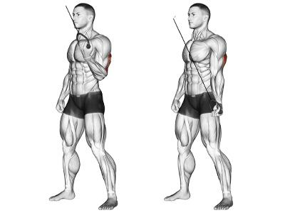 عضلات درگیر پشت بازو سیم کش تک دست چکشی