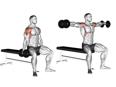 عضلات درگیر نشر جانب جفت دمبل نشسته