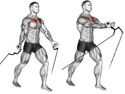 عضلات درگیر حرکت کراس اور از پایین