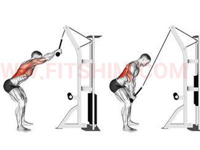 تصویر عضلات درگیر حرکت پول اور طناب زانو زده